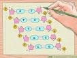 ДНК-Схема